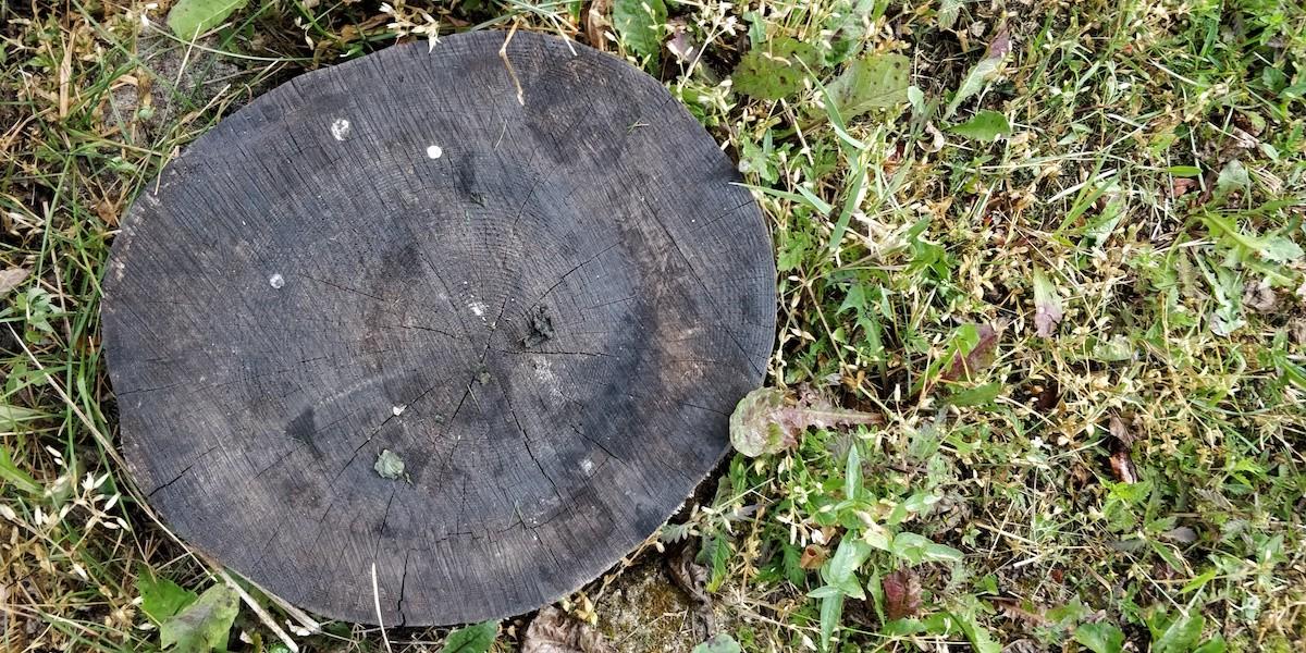 lühipuhkus eestis saunaga metsamaja spithami puhkemajad