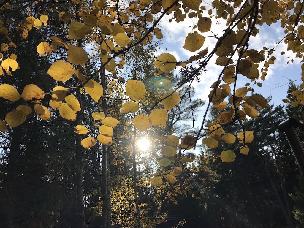 puhka eestis puhkus looduses metsas